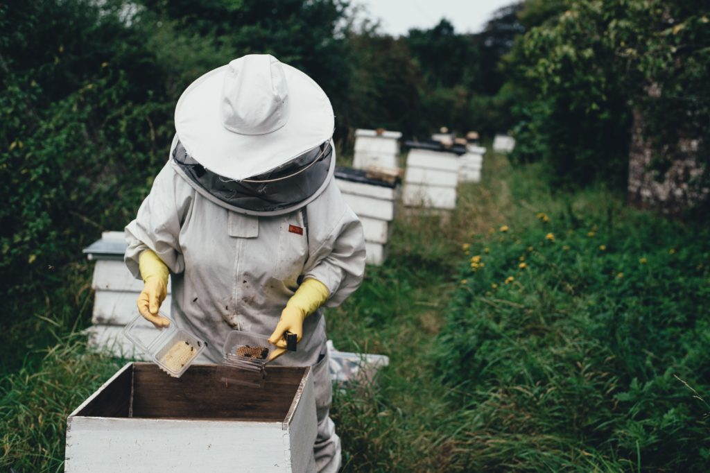 Cape bee deaths mystery solved