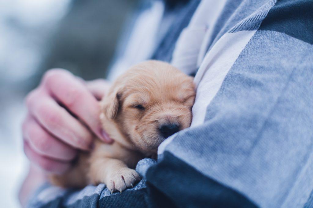 Local vet treats influx of sick dogs