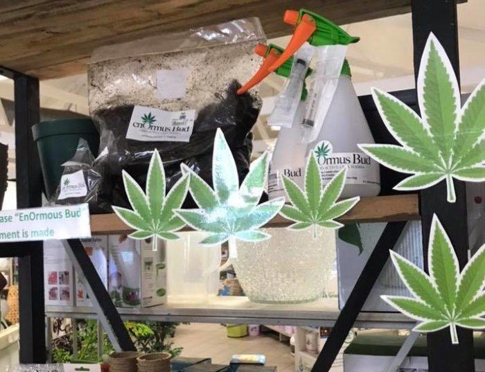 Cape nursery sells dagga growing kits