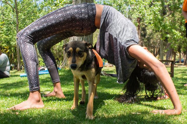 Downward Facing Adopt A Dog