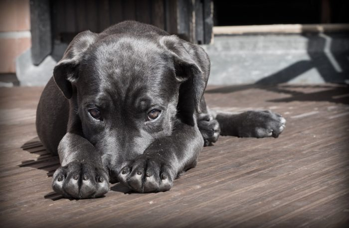 'Fake' vets cause pet deaths in Cape Town
