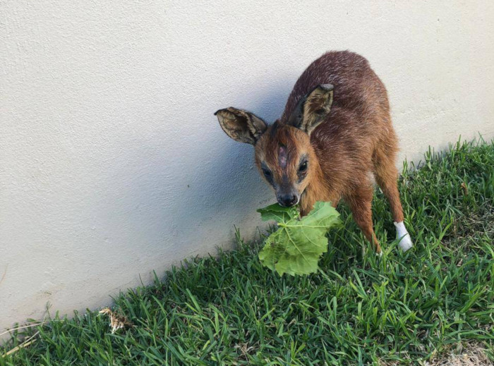 Update: Bambi loses sight in one eye
