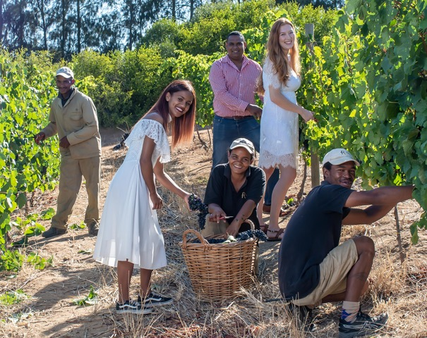 Paarl Hosts Harvest Celebration