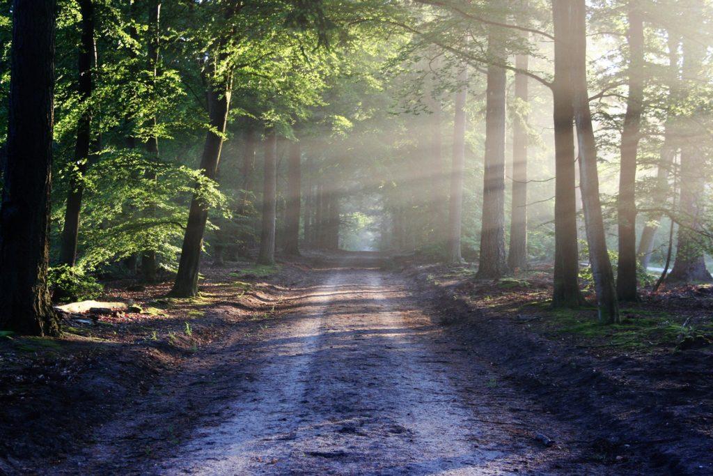 Silent walking meditation in Newlands Forest