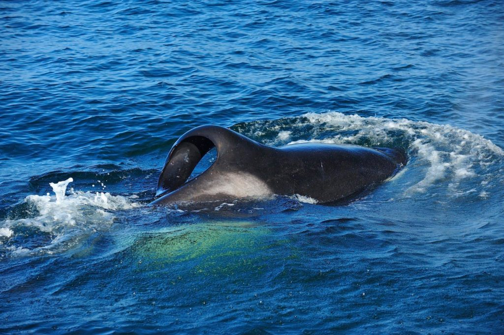 Killer whales spotted in Simon's Town