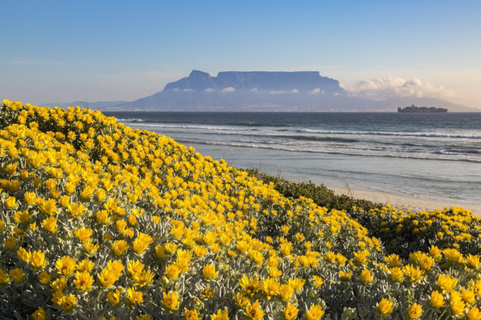 9/10 Capetonians love living here