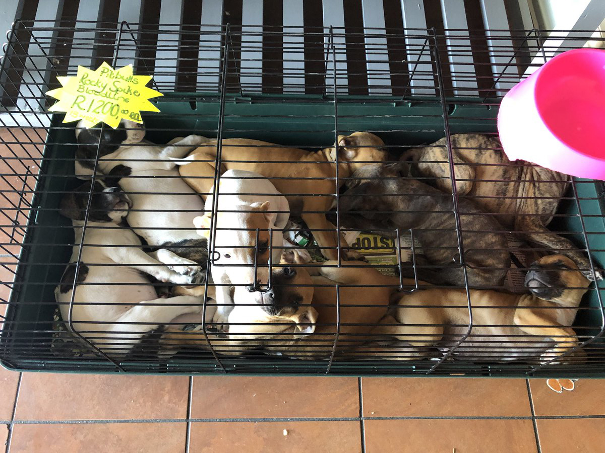 Pet shop keeps pups in hamster cage
