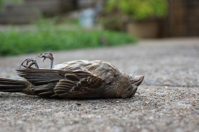 Avian botulism in Garden Route