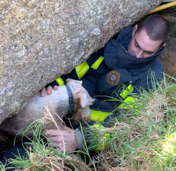 Dog rescued in Simon's Town