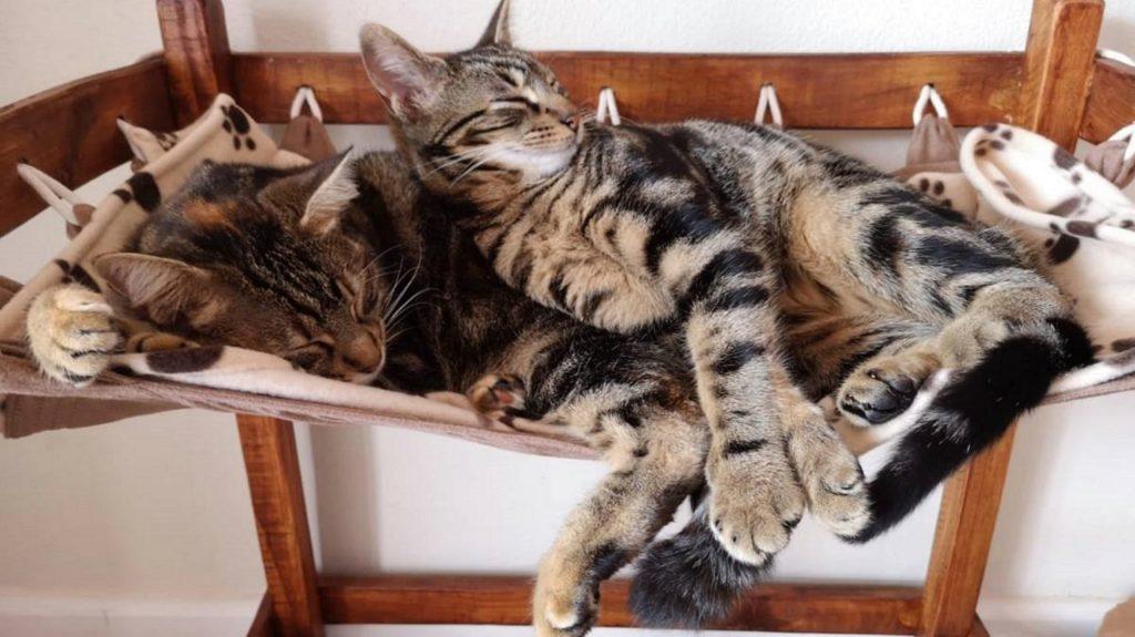 Café serves cake, coffee and cat cuddles
