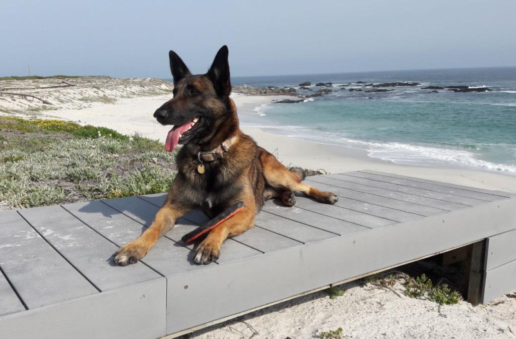 Adored Cape adventure dog falls ill