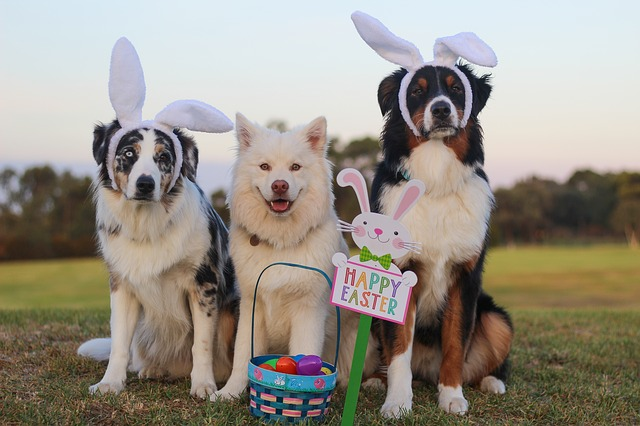 Hunt for eggs and pets this Easter
